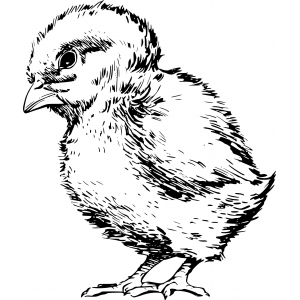 Для цыплят от 10-20 дн.