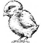 Для цыплят от 0-10 дн.