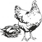 Для кур яичных кроссов