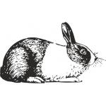 Для взрослых кроликов